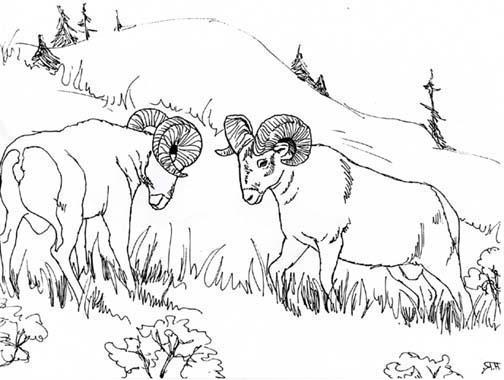 Animal Colorings – Bighorn – Disney Coloring Pages