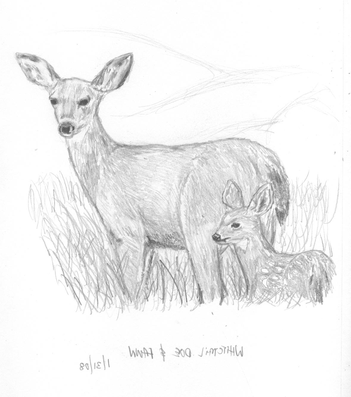 Disney Coloring Pages Deer